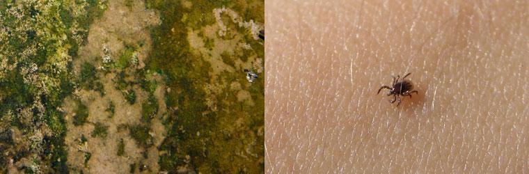 梅雨時の家具の湿気対策